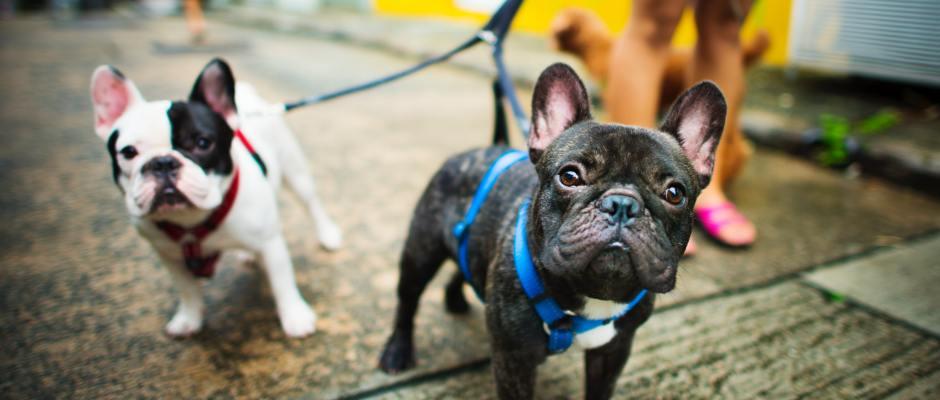 dog walker business