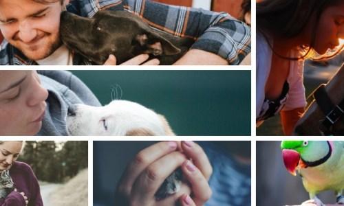 Cosmodoggyland - Starting a pet service business