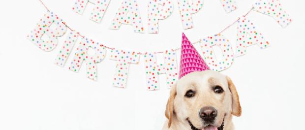 Happy Bithday Dog