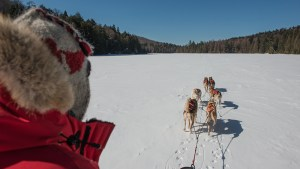 Dogsledding Expeditions
