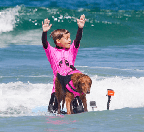 Therapy dog surfing with child