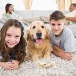 pet insurance family insured