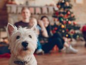 Cute cheerful family, dog in the foreground, happy parents with baby celebrate Christmas and New Year holiday