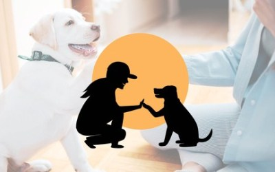 Dr. Sammy's Practical, Easy Dog Training for the Real World