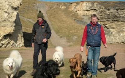 Professional Dog Walker Training Course