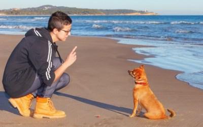 Dog Behavior & Training Problems