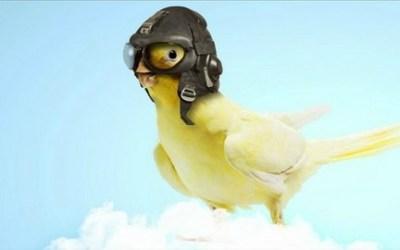 Holistic Pet Bird Care