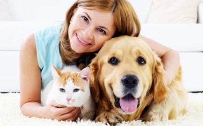 Pet Sitting Certificate