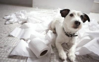 Ansiedad por separación en los perros - La guía definitiva