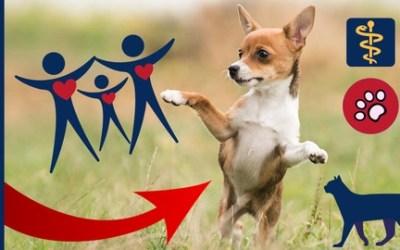 Dog Behavior Dog Training Pets & Animals - Holistic Approach