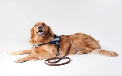Dogs As Emotional Support To Ease Anxiety or Depression