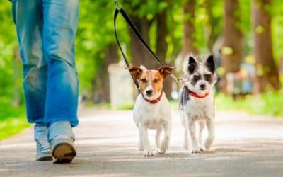 Dog Training - Polite Leash Walking Class