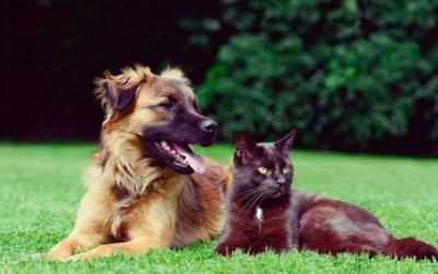 Dog & Cat Behavior Problems