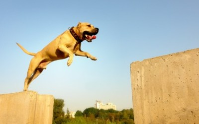 Training dog parkour (TreT-Style). Step by step lessons!