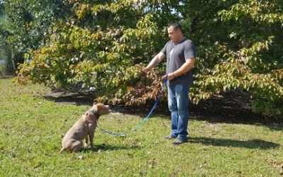 Dog training - Introduction to Obedience