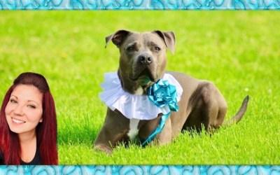 Dog Training Tricks: Trick Training, Dog Games & Dog Paw Art