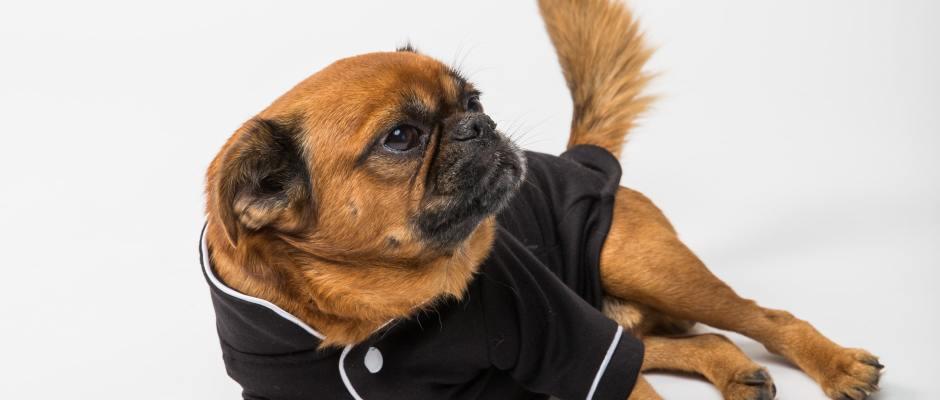 Dog in fancy pijamas