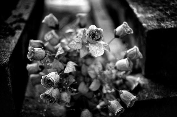 comp (7)_Snapseed