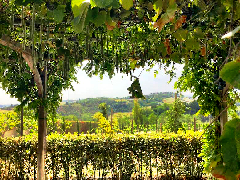 Enchanting garden with a view at Palazzo di Varignana Resort & Spa near Bologna