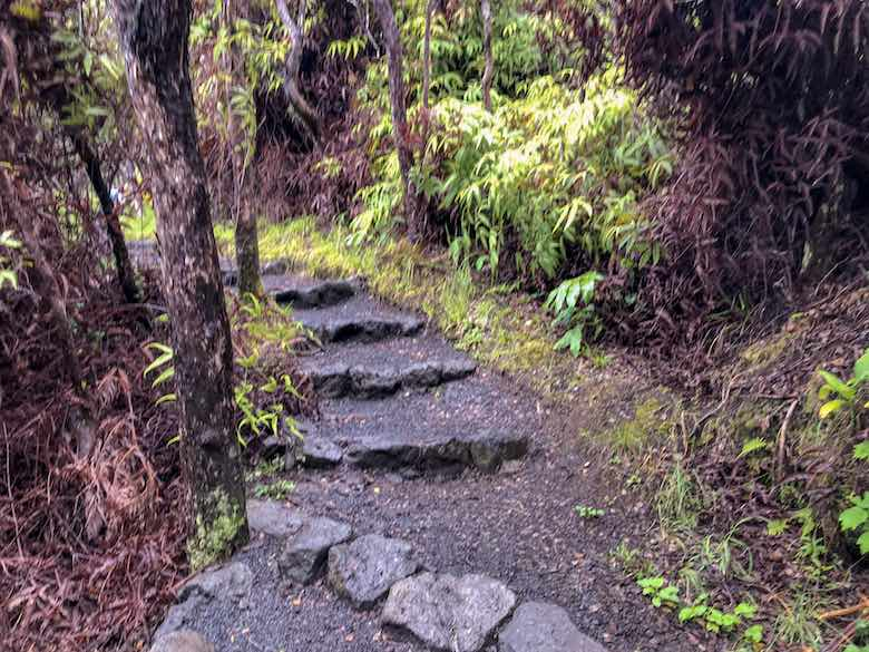 The first part of the Kilauea Iki Trail path through the rainforest on the crater rim