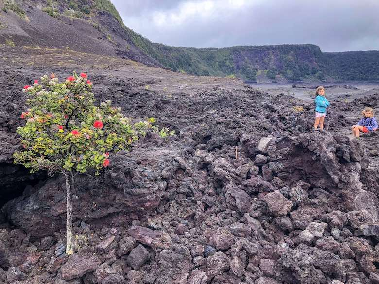 Right: Two little girls on the black lava of the Kilauea Iki crater - Left: Ohio tree blossoming in the lava in Hawaii Volcanoes National Park