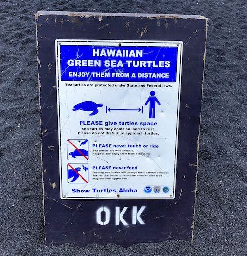 Hawaiian green sea turtles are frequent visitors to Pu'unalu black sand beach Hawaii