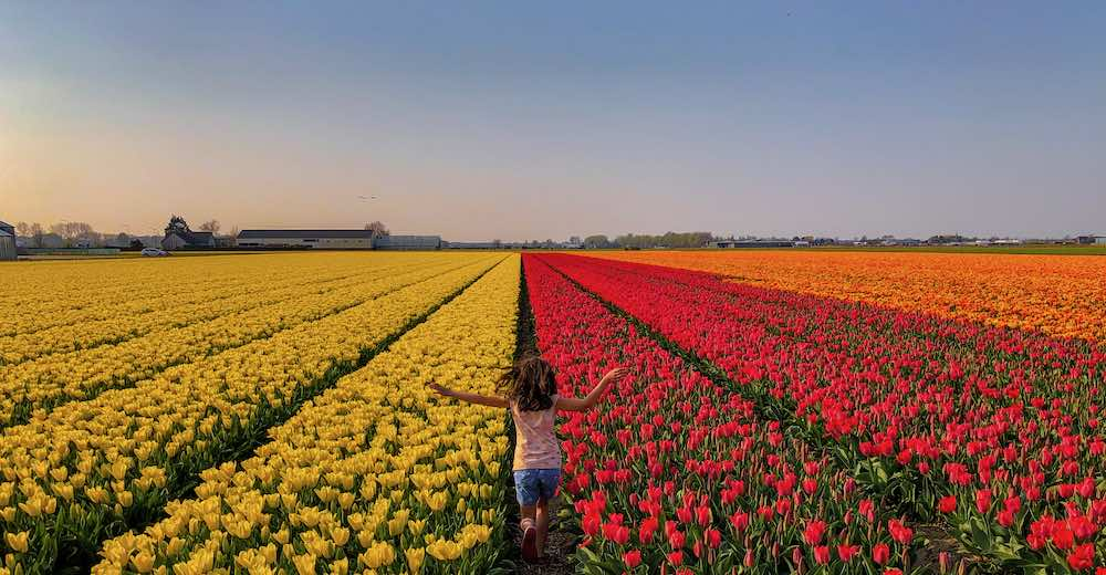 Girl running amidst the tulips near Keukenhof Gardens, a perfect Brussels day trip
