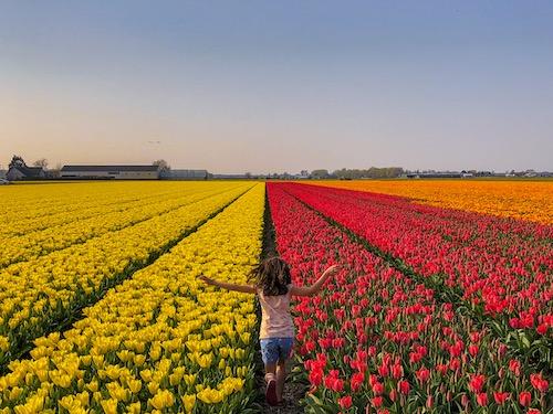 Meisje loopt door tulpenveld in Nederlandse bollenstreek
