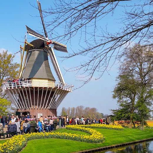 Beautiful windmill in the beautiful Amsterdam tulip garden Keukenhof Holland