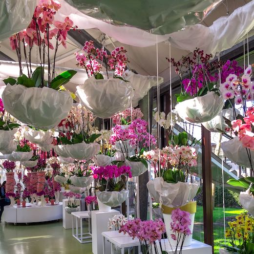 Orchids in large swinging baskets at one of the pavilions in the tulips garden netherlands