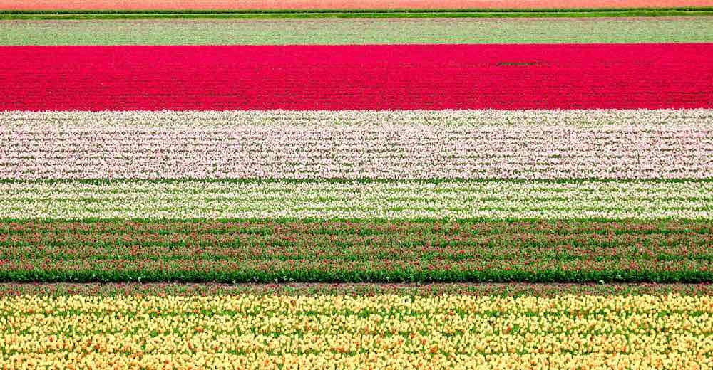 Colorful landscapes during Netherlands tulip season