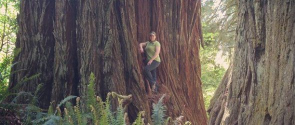 PCS 2013: Day 10 – The Magnificent Redwoods