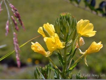 Roadside Wildflowers and Bugs | #WordlessWednesday