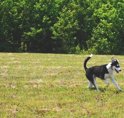 Run Doggies, Run!