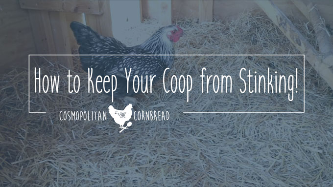 Three Things to Keep Your Chicken Coop from Stinking | Cosmopolitan Cornbread