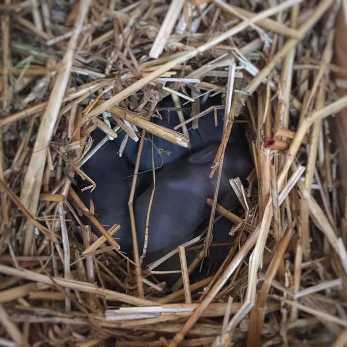 Newborn kits on the homestead | Cosmopolitan Cornbread