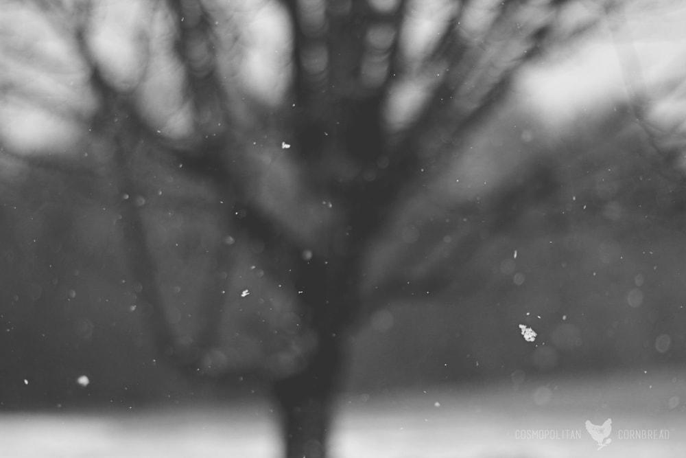 Snow in Alabama | A rare treat in a southern state. | Cosmopolitan Cornbread