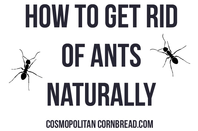 How to get rid of ants naturally - Follow these simple steps to get the ants out of your pantry, once and for all. And do it without poisons! Find out how on Cosmopolitan Cornbread.