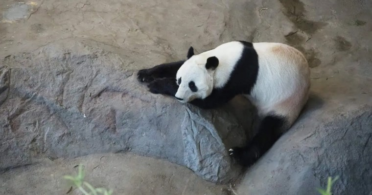 Eating reindeer and visiting pandas