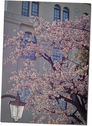春のひかり