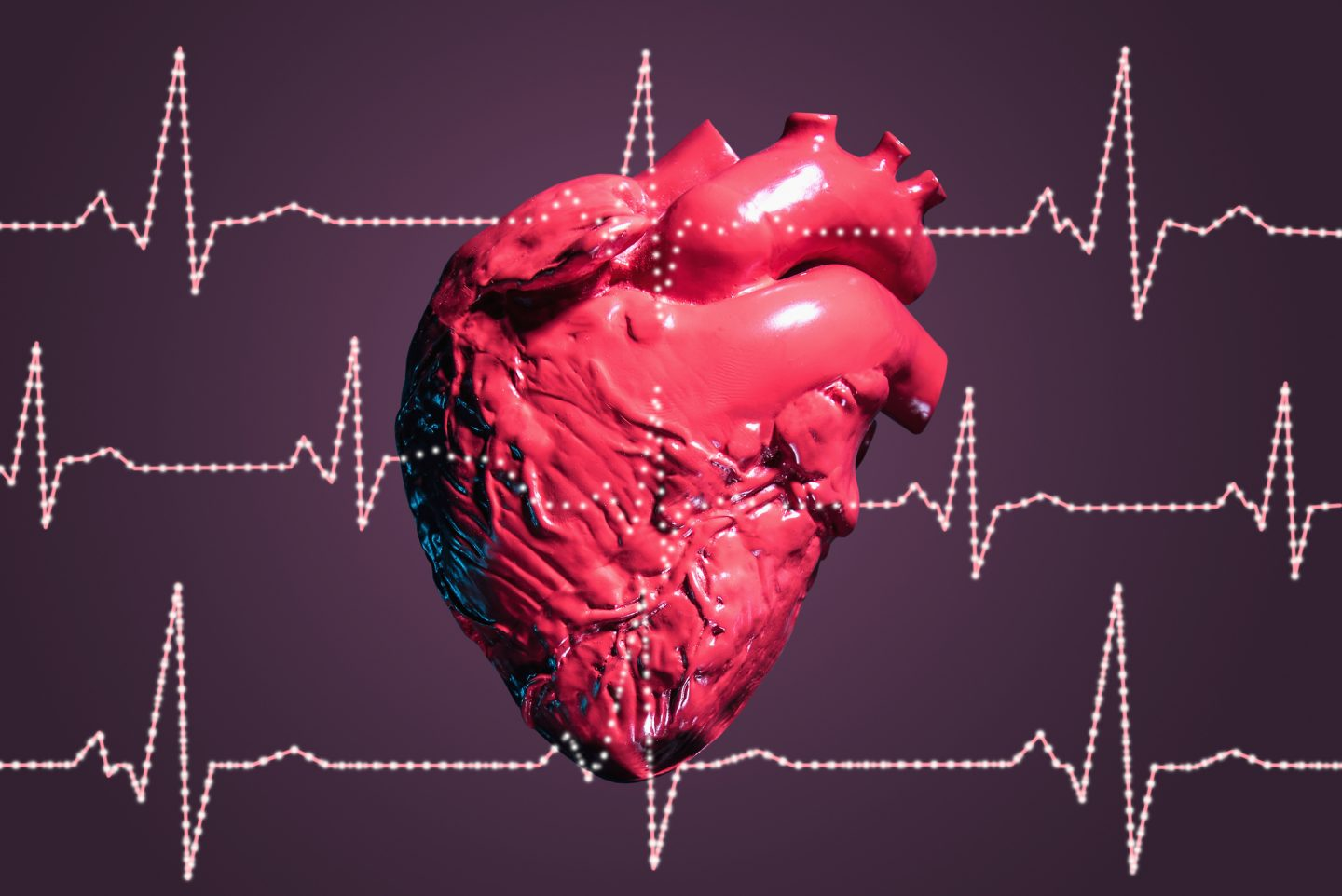 The Heart Contains Two Distinct Populations Of White Blood