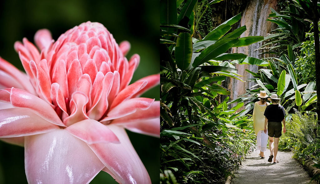 A collage of people exploring the Diamond Falls Botanical Gardens and a pink flower native to St Lucia