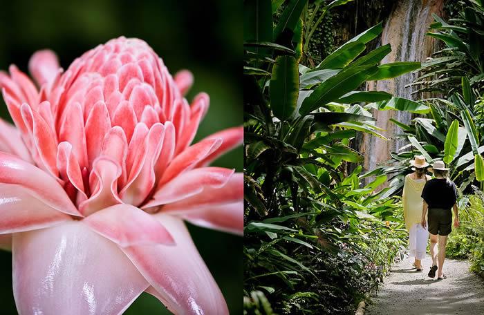 The Botanical Gardens St Lucia