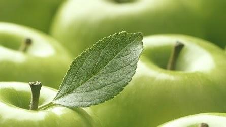 Close up of shiny Granny Smith apples