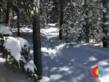 Powder run at Winter Park