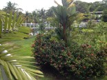 Morning in Bocas