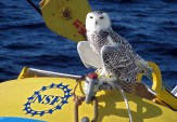 An owl helps with oceanographic research! Photo by John Lund, Woods Hole Oceanographic Institute