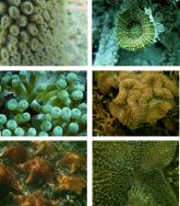 Reef buddies