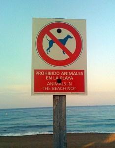 playa-animales-mascotas
