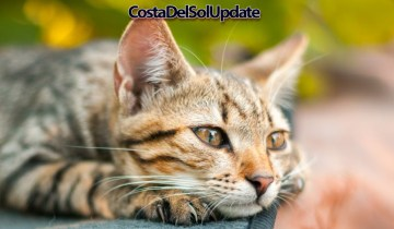 Expats Forced To Take In Stray Cats